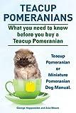 Teacup Pomeranians. Miniature Pomeranian or Teacup