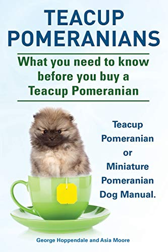 Teacup Pomeranians. Miniature Pomeranian or Teacup