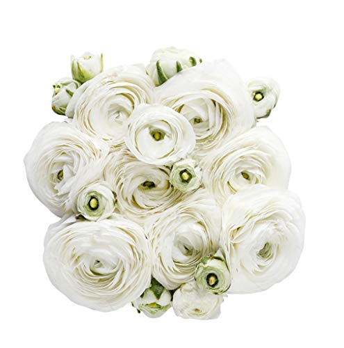 White French Peony Ranunculus -1...