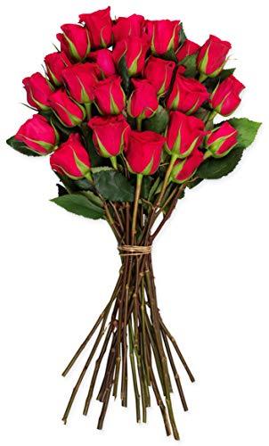 (Benchmark Bouquets 2 Dozen Hot Pink Roses, No Vase (Fresh Cut Flowers))