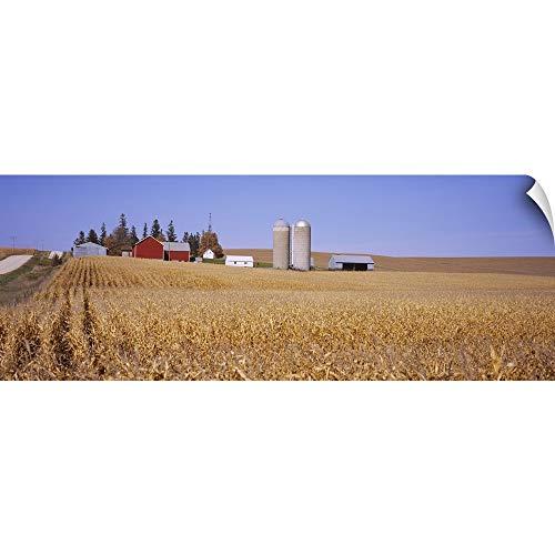 Minnesota Corn (Canvas on Demand Wall Peel Wall Art Print Entitled Silos and barns in a Corn Field, Minnesota 60