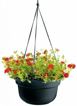 Bloem 12in Dura Cotta Hanging Basket Black, 12 pack by Bloem