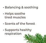 Plant Therapy Balsam Fir Essential Oil 10 mL