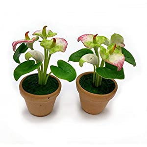 The Best Buy Dollhouse Miniature 2 Anthurium Plant in Terracotta Pots 87