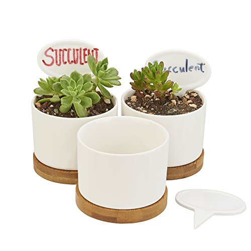 Planter Pots Indoor, Flowerplus 3 Pack 3.1 Inch White Ceramic Small Round Succulent Cactus Flower Plant Pot with Bamboo Tray and Little Plants Signs for Indoors Outdoor Home Garden Kitchen Decor by flowerplus