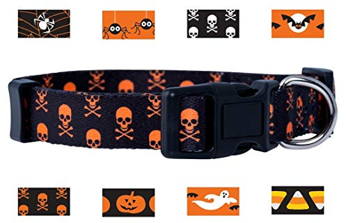 Native Pup Halloween Dog Collar (Small, Orange Skull and -