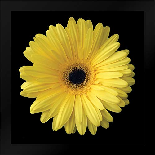 Gerbera Daisy Yellow 20x20 Framed Art Print by Christensen, Jim