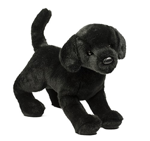 Douglas Chester Black Lab