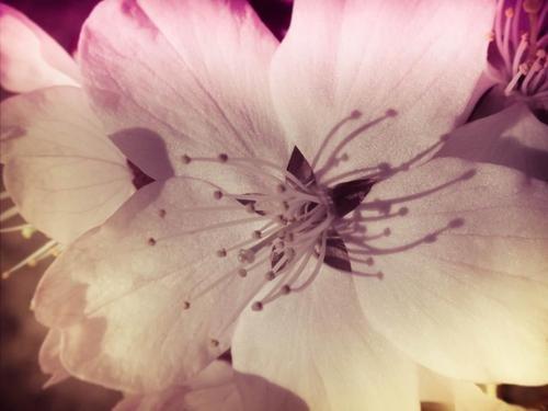 Garden Of Dreams (Dreaming of Daisies Book 1)