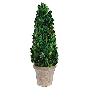 Preserved Boxwood Triangle Topiary 77