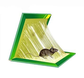 Piege fait maison pour souris ventana blog - Piege a souris fait maison ...