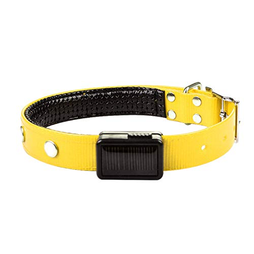 (everd1487HH Durable Puppy Dog Buckle Solar Powered LED Luminous Adjustable Neck Collar Pet Supplies Yellow XL)