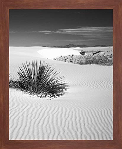 (New Mexico, White Sands NM Bush in Desert Sand by Dennis Flaherty - 14