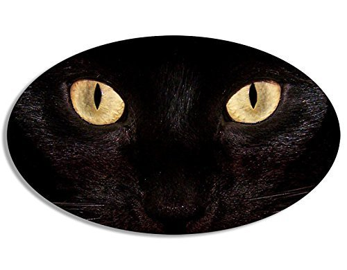 MAGNET OVAL Black Cat Eyes Only Magnetic Sticker (funny pet - Eye Custom Rim At The Care