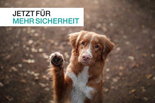 41Zsfu STUCH ® Universeller Bungee Sicherheitsgurt für Hunde & Katzen - Passend für alle Hunderassen & Autotypen (Rosa)