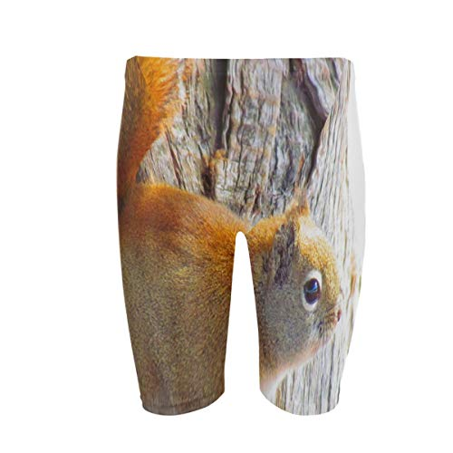 (Mens Swim Trunks Squirrel Animal Rodent Tree Jammers Lightweight Quick Dry Swimsuit for Beach Swimming)