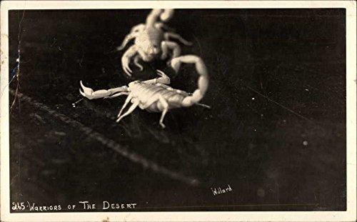 Scorpions: Warriors of the Desert Other Animals Original