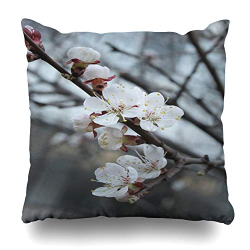 Ahawoso Throw Pillow Covers Green Apple Spring Fruit Trees White Flowers Nature Almond Orange Apricot Bloom Blooming Design Leaf Home Decor Zippered Pillowcase Square Size 20 x 20 Inches Cushion Case ()