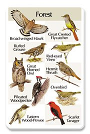 Birdsong Card - For The Birds - IdentiFlyers Forest