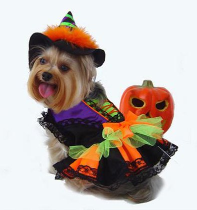 Witch Deluxe Halloween Costume w/ Hat For Dogs by Puppe Love (Classic Halloween Witch, Size 6 (16