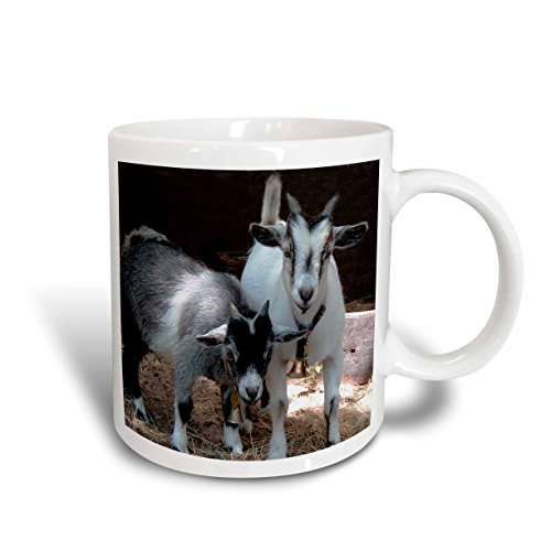 3dRose Pygmy Goat Mug 11 Ounce