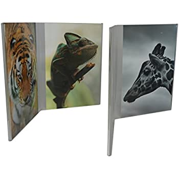 Amazoncom Bent Acrylic Frame 4x6 Triple Vertical Single Frames