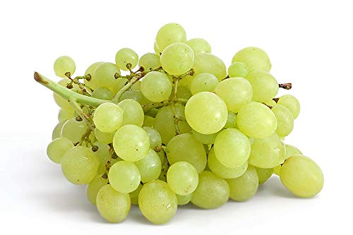 TkSolution2 White Grape Vines, Seedless Grapes 2 yr Old Healthy Bare Root Wine Jam-6 -