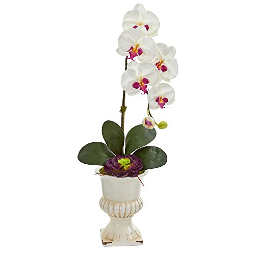 Nearly Natural 1609-WH Orchid and Succulent Artificial Urn Silk Arrangements, White