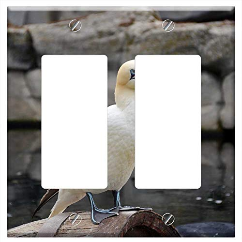 (Switch Plate Double Rocker/GFCI - Northern Gannet Bird Animal White Water Bird)