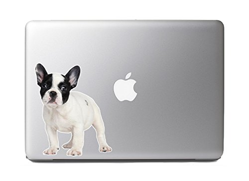 Cute Fluffy Animals #9 - French Bulldog Puppy Portrait - Vibrant High Resolution Full Color Vinyl Laptop Tablet ()