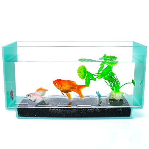 1.3 Gallon Fish Tank,Betta  Aquarium Fish,Clear Fish Bowl for Your Office/Livingroom/Bedroom Desk,Green-SupperAcrylic by SupperAcrylic