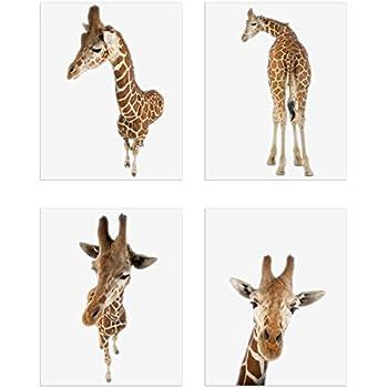 Crystal Minimalist Giraffes Prints - Set of 4 (8x10) Unique Giraffe Poses and Angles Nursery Photography Wall Art Decor