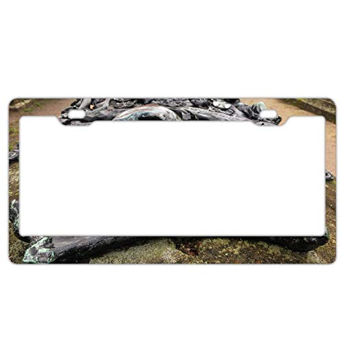 (YEX Abstract Halloween Skeleton2 License Plate Frame Car Licence Plate Covers Auto Tag Holder 6