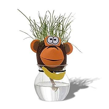 Cabeza de animal de pelo de hierba que crece Cerdo: Amazon.es: Juguetes y juegos