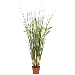 Nearly Natural 6647 Grass Plant, 2.5-Feet, Green