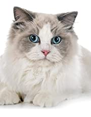 Ragdoll: Cat | Composition Book 150 pages 8.5 x 11 in. | Wide Ruled | Writing Notebook | Lined Paper | Soft Cover | Plain Journal