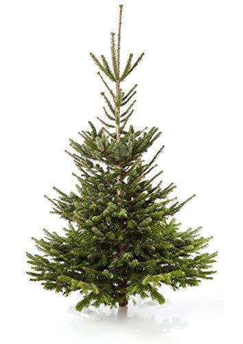 Echter Weihnachtsbaum Nordmanntanne, H ca. 185 - 210 cm, Premiumqualität, frisch geschlagen