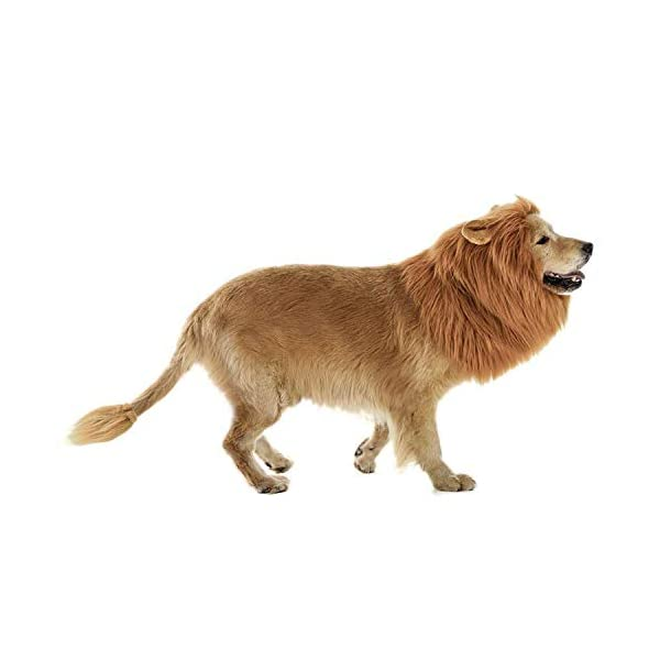 lcfun Lion Mane Costume for Dog – Pet Wig with Ears and Gift [Lion Tail], Dog Clothes for Halloween Party