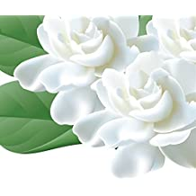 Futaba®Jasmine Jasminum Oleaceae erect or climbing shrub 50 seeds