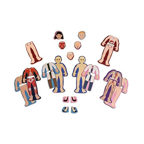 Amazon Ts Shure Human Anatomy Wooden Magnetic Figures Toys