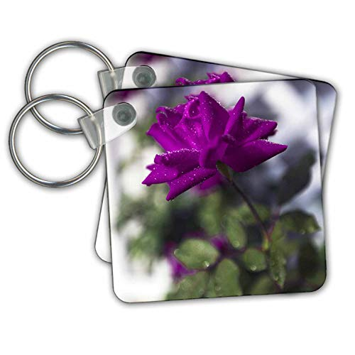Stamp City - flowers - Photograph of a wet, purple rose growing up a trellis in our garden. - Key Chains - set of 2 Key Chains (kc_302872_1) (Chain Trellis)
