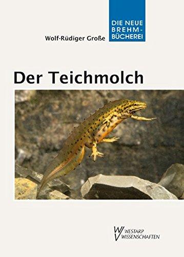 Der Teichmolch - Lissotriton vulgaris