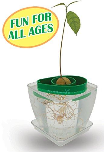 AvoSeedo Bowl Set Grow Your Own Avocado Tree, Evergreen, Perfect Avocado Tree Growing Kit for Every Avocado Lover with Plan Pot - Green & (Grow Tree Seed)