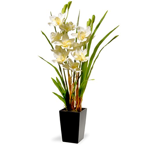 National Tree 31 Inch White Orchid Flowers with Black Square Base (NF36-5290S) by National Tree Company