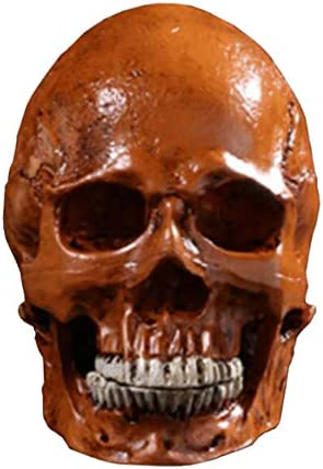 Amazon Com Ypy 1 1 Life Size Model Human Skull Replica Model Skull Head Gothic Decoration Prop For Halloween Decor Red Home Kitchen