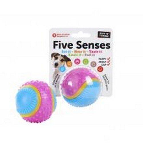 Five Senses Pelota sensorial perros (6.35cm) (Variado): Amazon.es ...