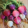 Easter Egg Radish Seeds, 250+ Premium Heirloom Seeds, ON SALE!, (Isla's Garden Seeds), Non Gmo Organic, 99.7% Purity, 90% Germination, Highest Quality!