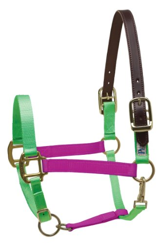Perri's Safety Halter, Lime/Raspberry, Horse