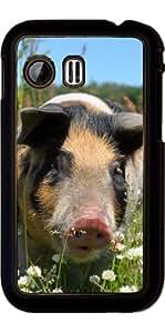 Funda para Samsung Galaxy Y (S5360) - Animales De Granja De Cerdos by WonderfulDreamPicture