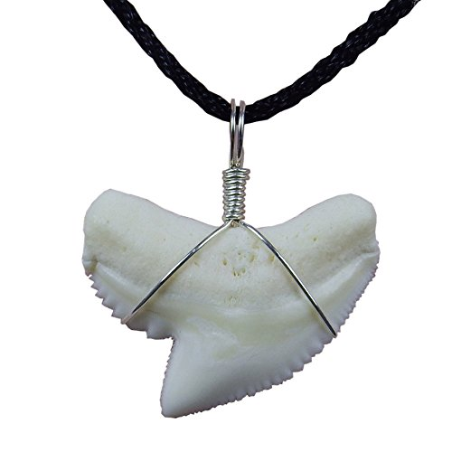 (GemShark Real Shark Tooth Necklace White Mako Tiger Shark Sterling Silver Charm Pendant for Boys Girls (1.2 inch Tiger))
